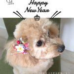 本日のすすきさん(犬)Vol.1 2018年の年賀状をつくりました
