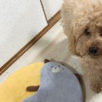 本日のすすきさん(犬)Vol.7