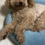 本日のすすきさん(犬)Vol.11