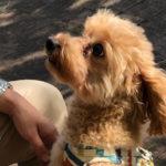 犬とお出かけ関西編・Vol.1「神戸フルーツフラワーパーク」